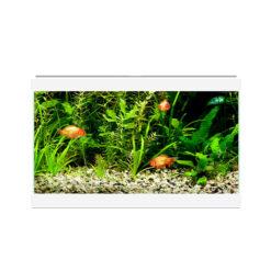 Bể cá cảnh Ciano Aqua 20C Fish Aquarium White
