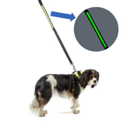 Dây dắt chó Dog Walk Reflective Flashing Dog Lead
