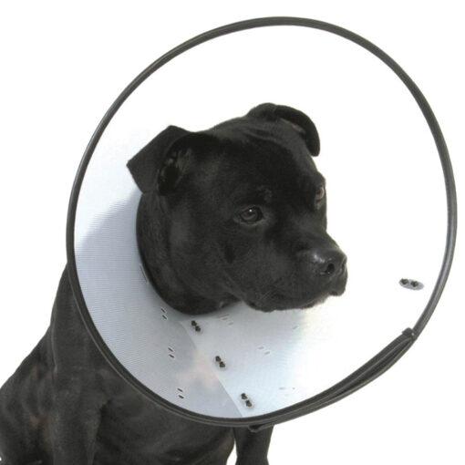 Vòng kỷ luật cho chó Company of Animals Elizabethan Smart Dog Collar