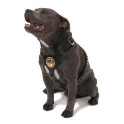 Xích cho chó đai ngực Ancol Bull Terrier Dog Harness Large Black