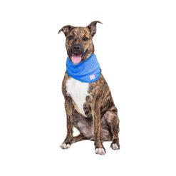 Yếm cho chó Cool Club Pet Ice Cooling Dog Bandana
